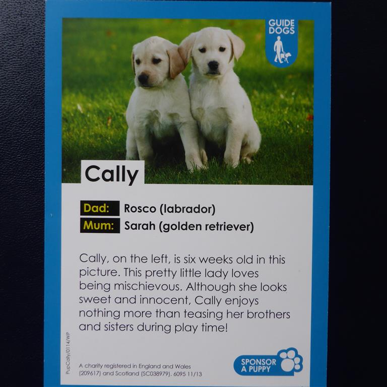 Sponsored Guide Dogs 003 Medium
