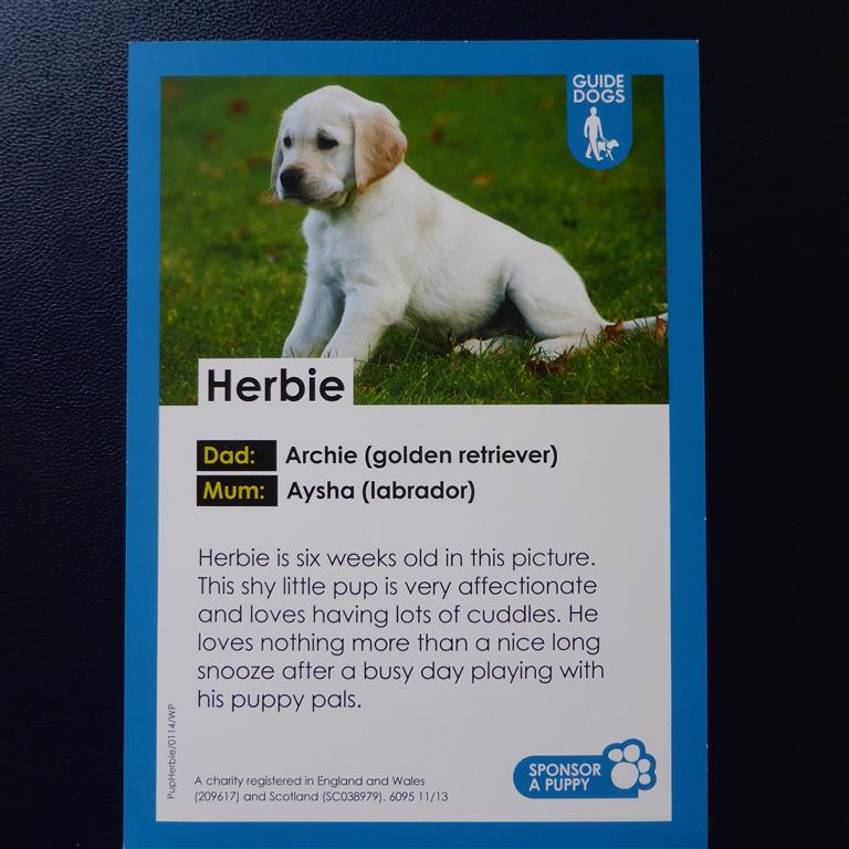 Sponsored Guide Dogs 008 Medium